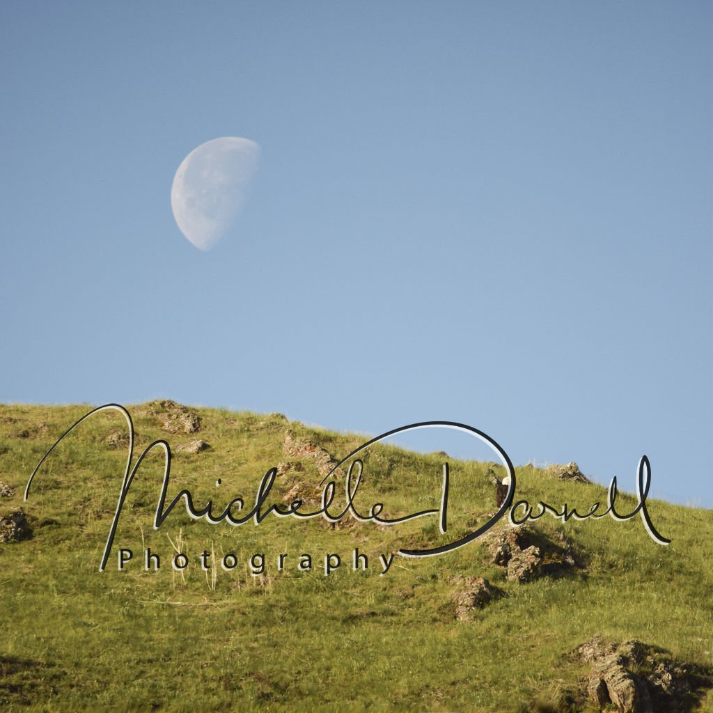 A bald eagle perches on a rock beneath a waxing moon at the National Bison Range, Moise, Montana. 72 dpi, 300 dpi